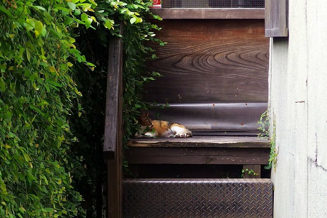 Today's Cat@2018-06-27