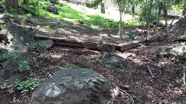 Reforestaciones-Parque-Chapultepec