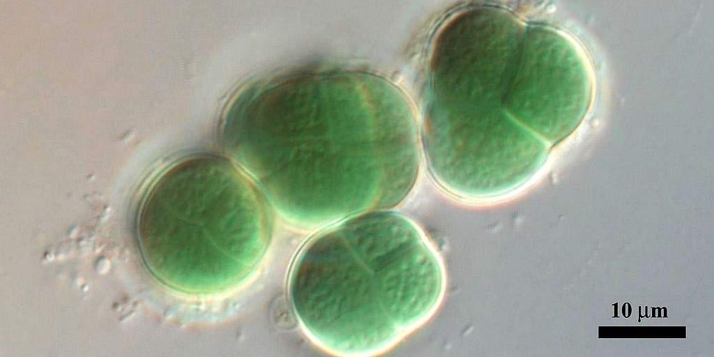 D'étranges bactéries pourraient potentiellement prospérer sur Mars