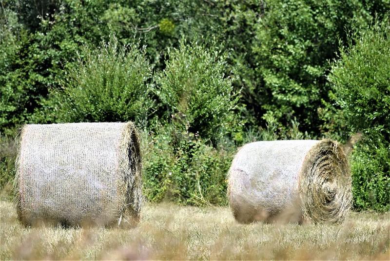 Crops 25.06 (1)