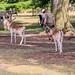 Bradgate Country Park 1st July 2018