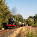 'Mystery' train
