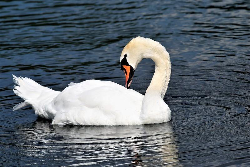 Swan 22.07 (4)