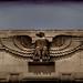 eagle by quigley_brown (Jim Hamann)