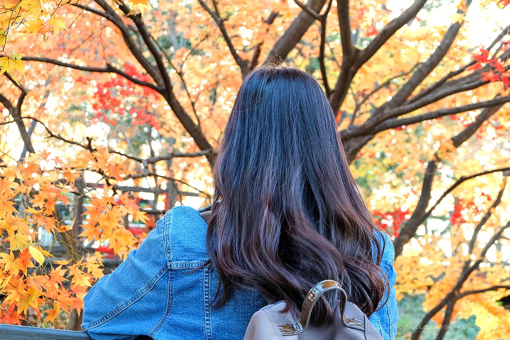 backshot_autumn_korea