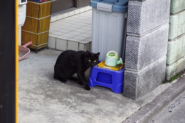 Today's Cat@2018-06-22