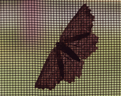 07-02-2018-moth_(1_of_1)