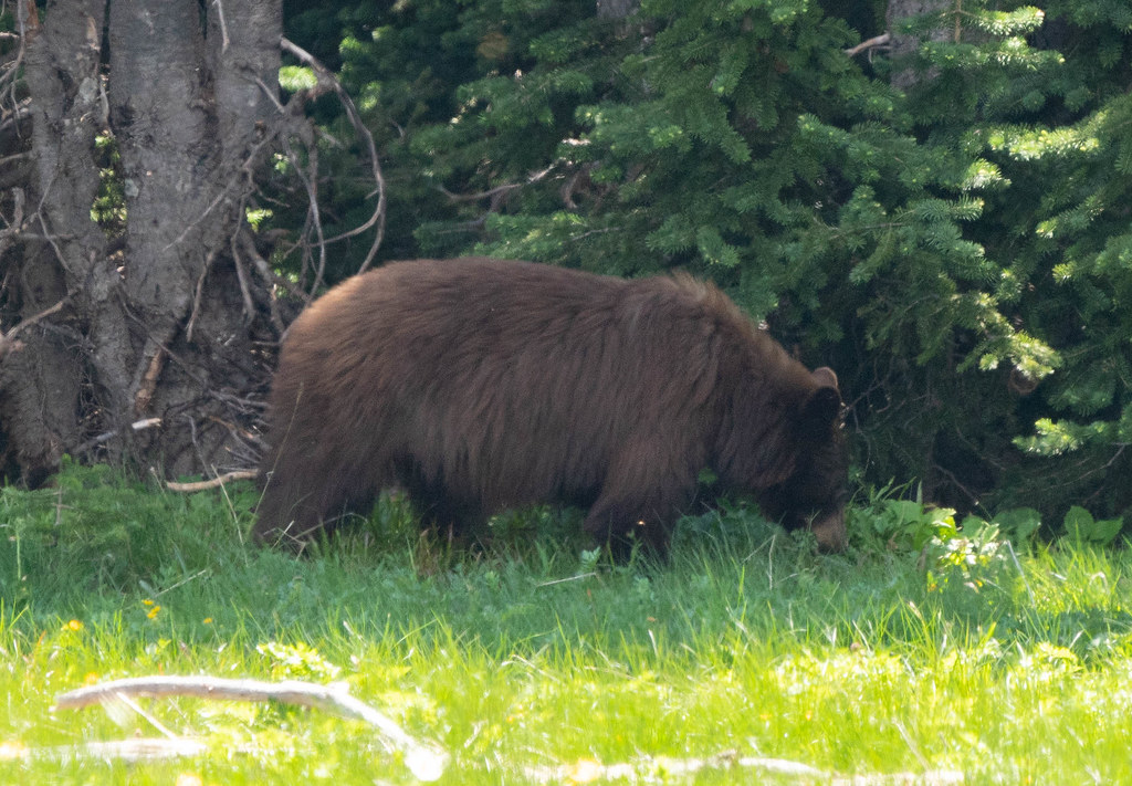 Bear 2 (1 of 1)