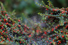 Morning dew - Photo of Drubec