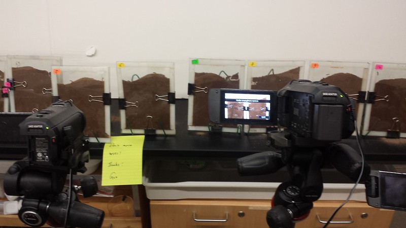 Filming ant queen behavior