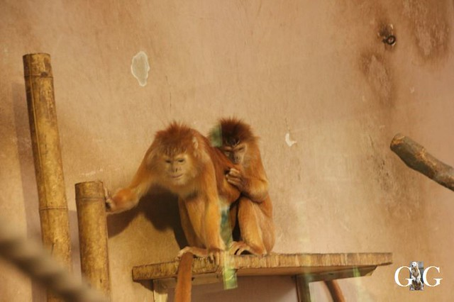 Besuch Zoo Budapest 22.06.201872