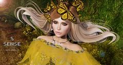 LOTD 1012 - Butterflies
