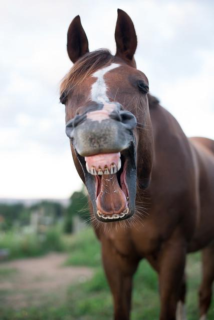 20180709 Horses_4