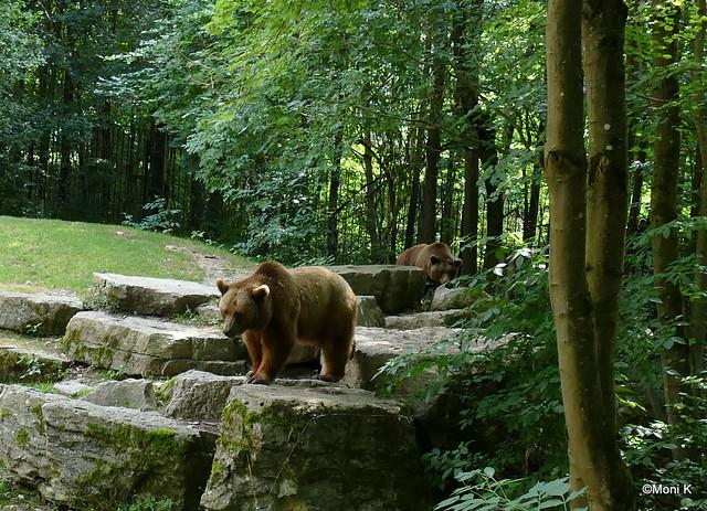 14-Europäischer Braunbär