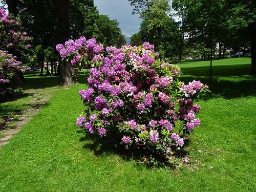 Spittal an der Drau, Carinthia, state of Austria (the art of public parks at the center of Spittal), Bahnhofstraße/Stadtpark/City Park