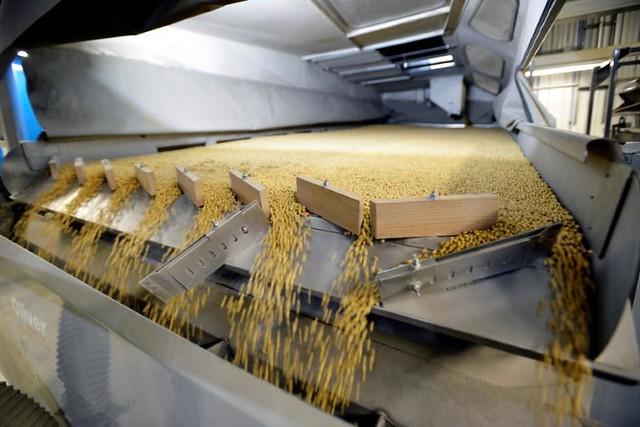 全球大豆生產的相當大部分被幾家美國公司控制著。巴西大豆從生產、運營到銷售幾乎都是美國公司控制的。
