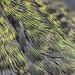 Anna's Feathers by jkirkhart35