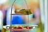 Baguette grignotée & radis à la dérive