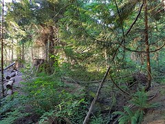 A look inside the woods