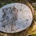 Barley, Aitken Wood - Pendle Sculpture Park (11)