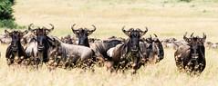 2018, TZ, Serengeti NP