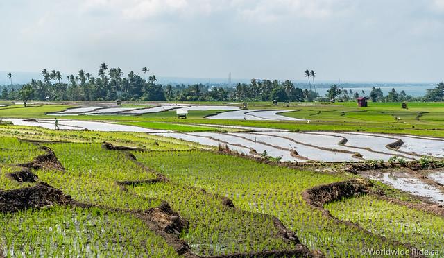 Sulawesi-12