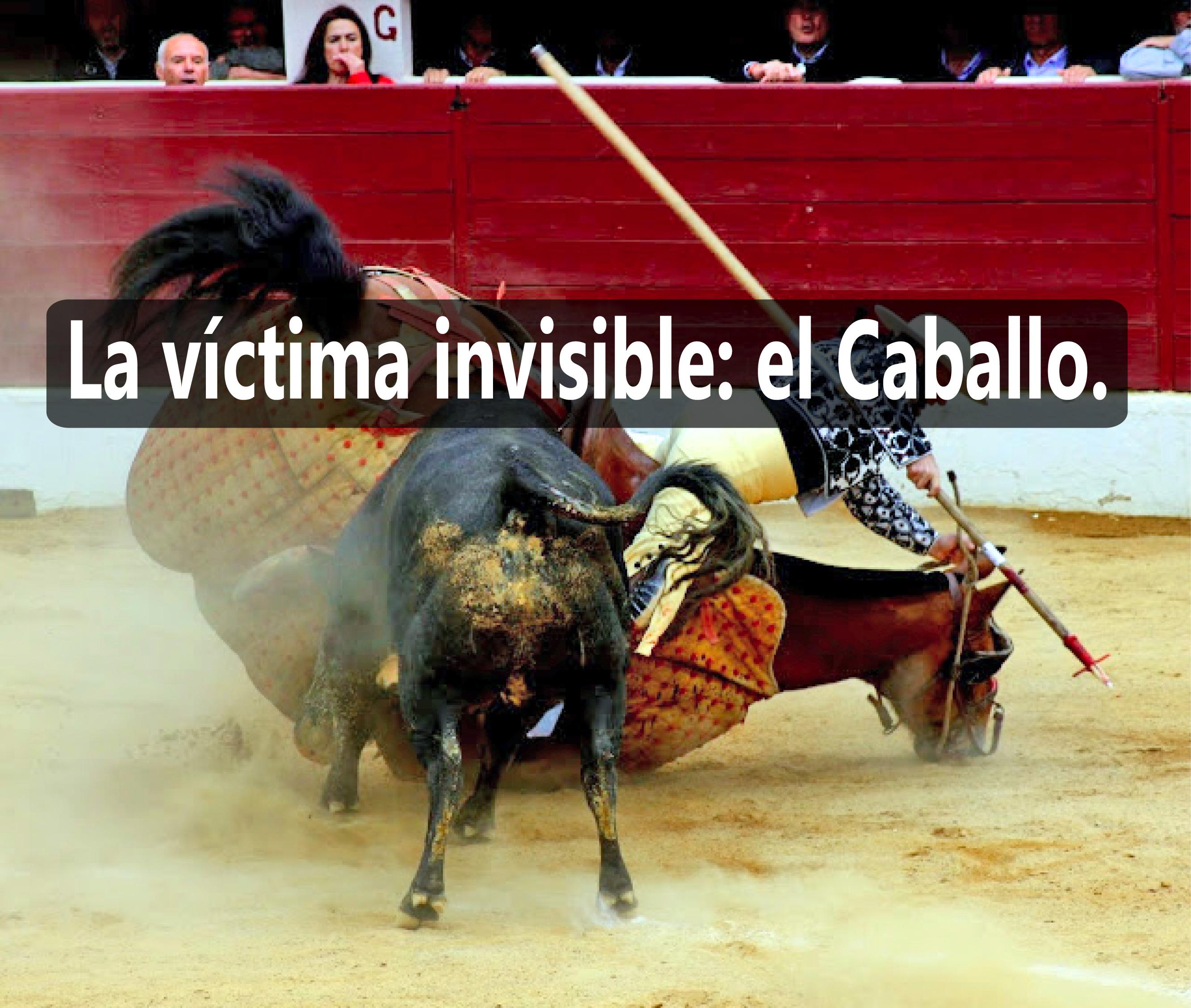 La víctima invisible: el Caballo en las corridas de Toros