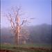 dead tree by steve-jack
