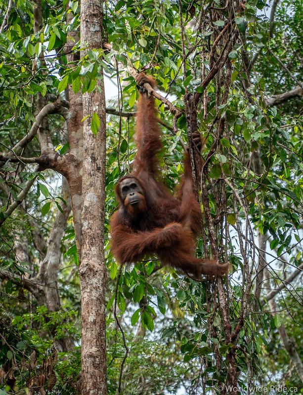 Borneo-35