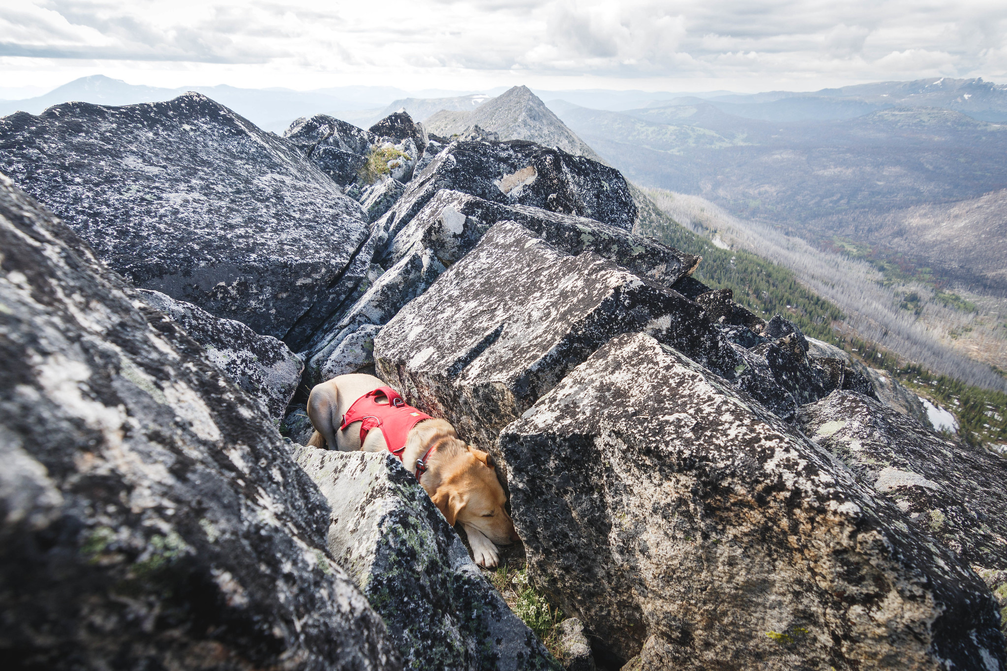 Summit dogs on Andrew Peak
