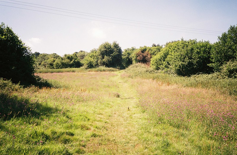 Dundry meadow