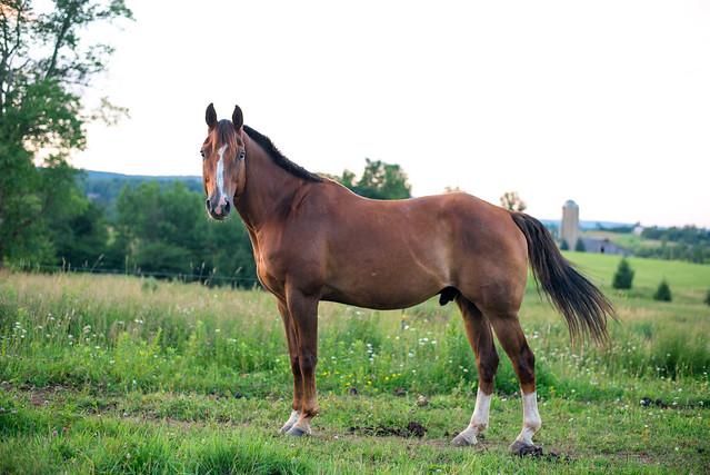 20180709 Horses_14