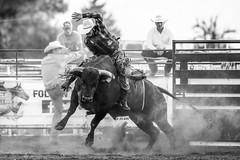 Johnson County Pro Bull Riding 2018