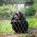 <p><a href=&quot;http://www.flickr.com/people/28703702@N08/&quot;>djsmith46</a> posted a photo:</p>&#xA;&#xA;<p><a href=&quot;http://www.flickr.com/photos/28703702@N08/42925326451/&quot; title=&quot;Berlin Zoo-8&quot;><img src=&quot;http://farm2.staticflickr.com/1788/42925326451_9e3f7bd05b_m.jpg&quot; width=&quot;180&quot; height=&quot;240&quot; alt=&quot;Berlin Zoo-8&quot; /></a></p>&#xA;&#xA;<p>OLYMPUS DIGITAL CAMERA</p>