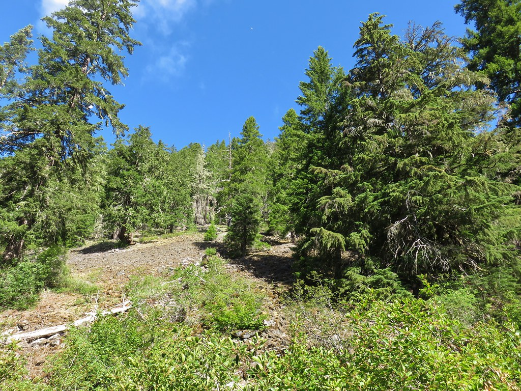 Hillside above the Elk Lake Creek Trail