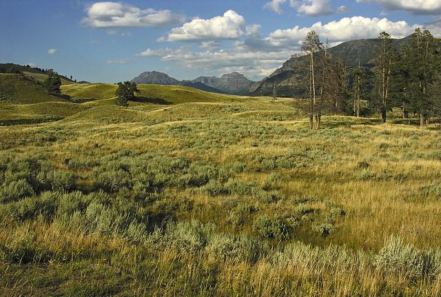 Near Soda Butte Creek, Nikon E8800