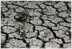 Droogte | Drought | Засуха