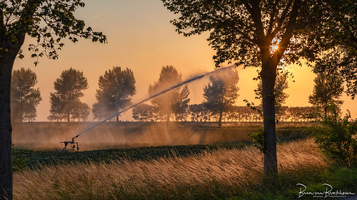 to irrigate at sunset