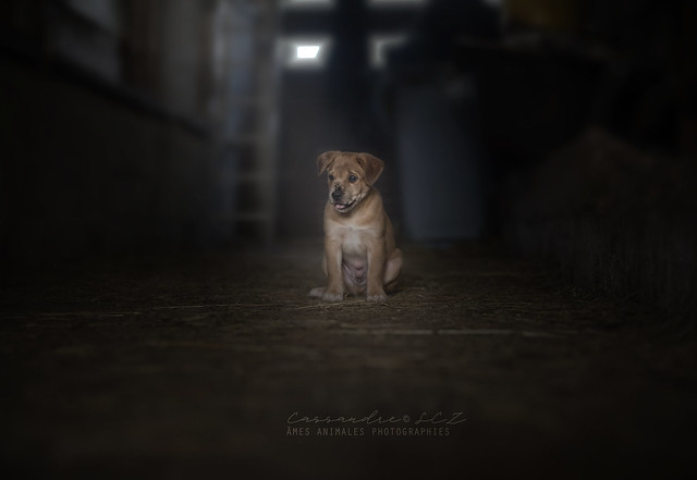 Âmes Animales Photographies - Page 3 29412183898_853829339c_z