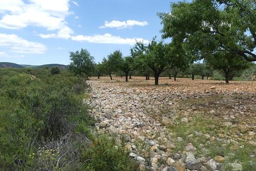 PUEBLA DE VALLES (Sierra Norte). Guadalajara (Spain). 2018. Cárcavas. Campo de piedras con olivos y almendros.