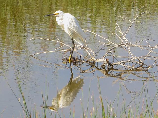 egret on alert