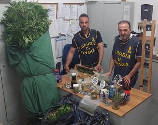Il materiale sequestrato e alcune piante
