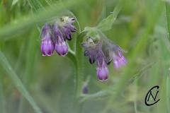 Flower power - Photo of Saonnet