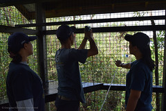 Enrichment team members working on one of the indoor enclosures