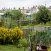 Scotland's Gardens Craigintinney Telferton July 2018 -91