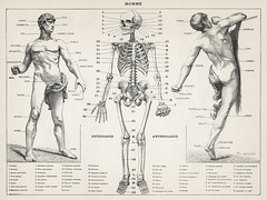 An antique illustration of the human body (1900) by Larousse, Pierre; Augé and Claude. Digitally enhanced from our own original plate.