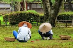 The gardeners - Kenroku-en, 兼六園, Kanazawa, Ishikawa, Japan,
