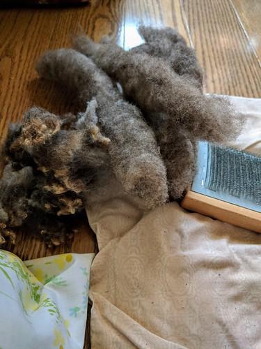 Preparing Olde English Babydoll Southdown wool on handcards by irieknit