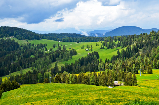 Just a Vernal Landscape