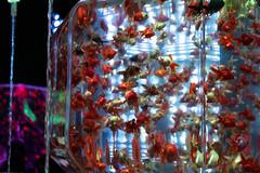 Art Aquarium2018 Nihonbashi